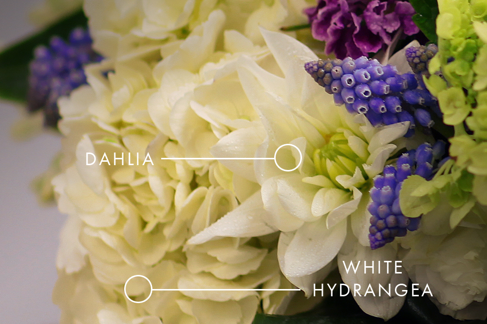 Close up of a White Dahlia and White Hydrangea